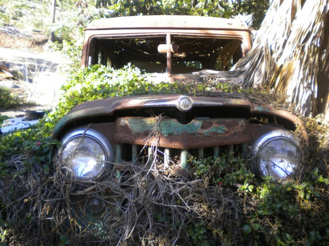 willys, abandoned willys, abandoned car