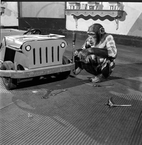willys toy, willys jeep, chimpanzee, jeep monkey, monkey wrench